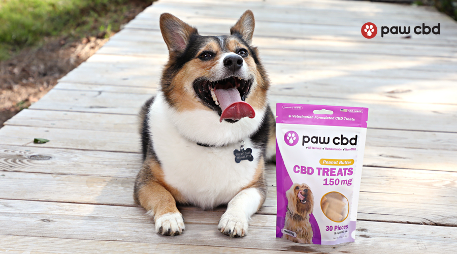 A corgi sits next to a bag of cbd treats for dogs from paw cbd