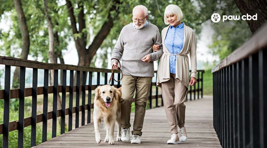 An elderly man and woman walk their senior dog along a foot bridge