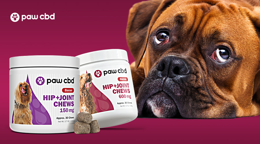 A brown and black boxer lays its face down next to two jars of hip and joint chews from paw cbd
